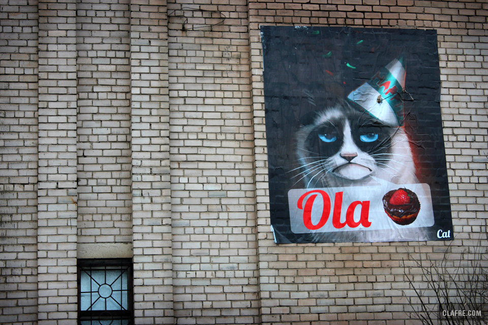 Сердитый кот на улице Космонавтов