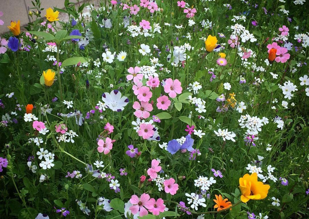 Цветы у «Диалога»