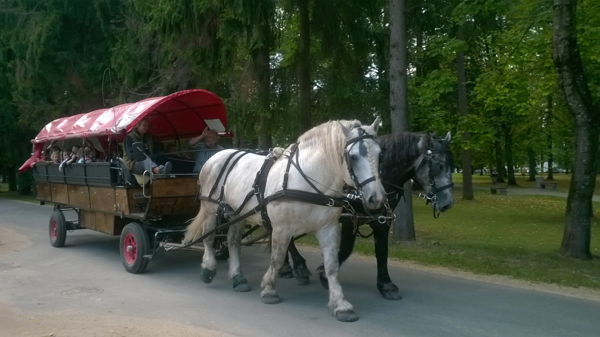 Лошади несут мир