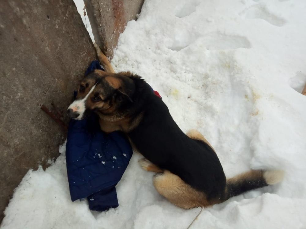 Спасение собаки в Боровичах