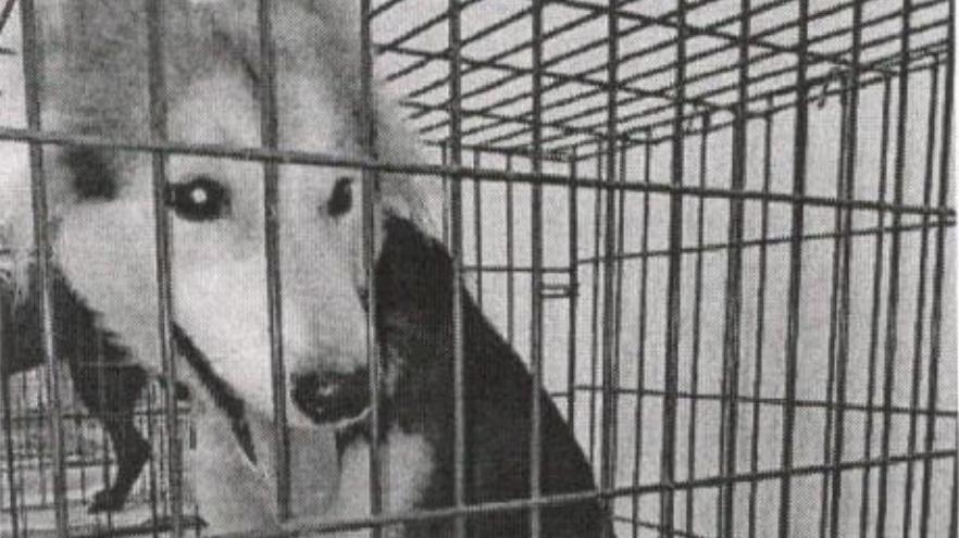 Отловленная собака
