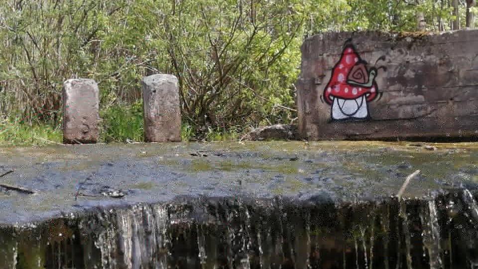 Граффити грибов в Сутоках