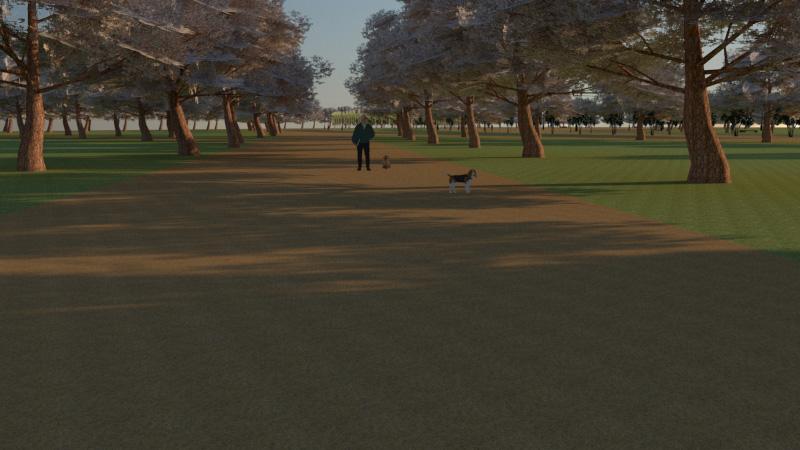 Собаки. Парк в Деревяницком районе
