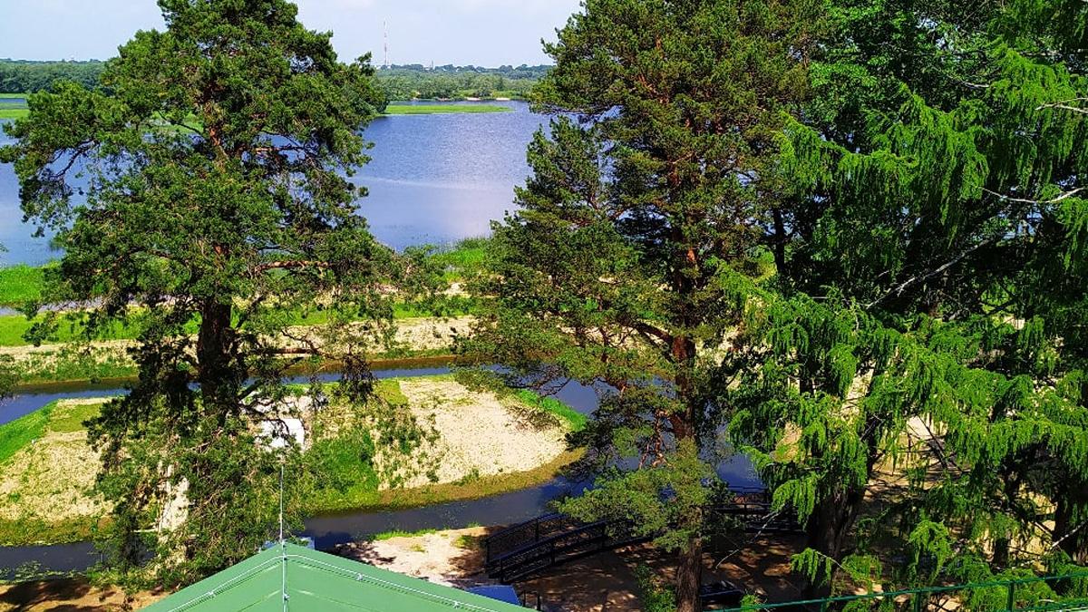 Остров в пруду
