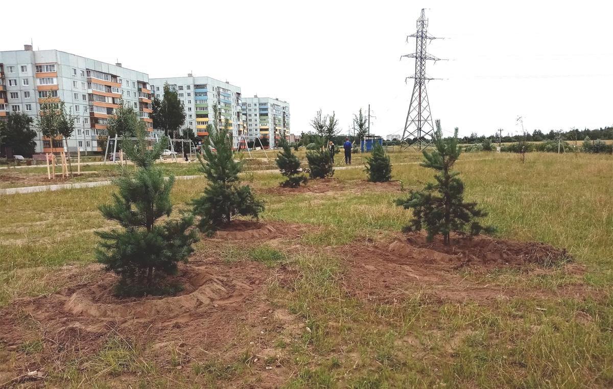 Озеленение в Веряжском парке
