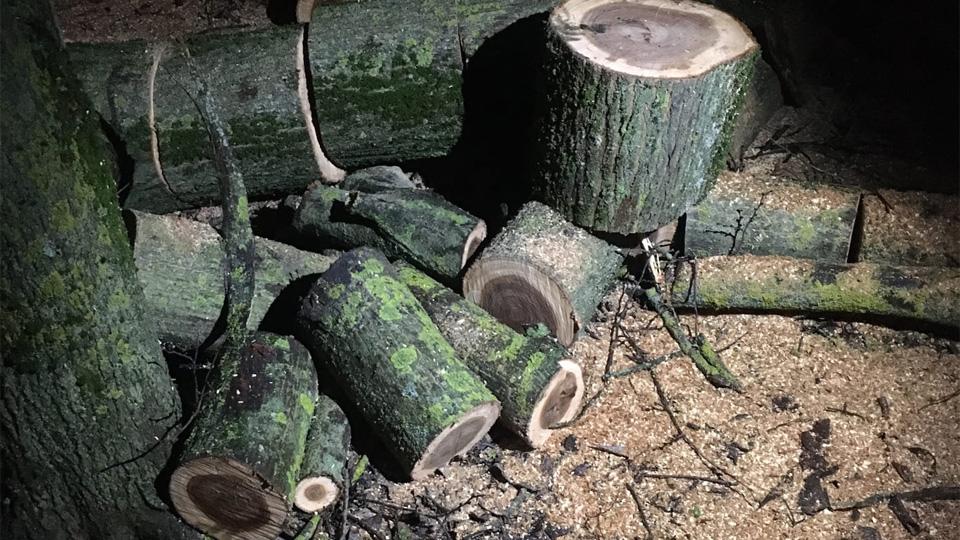 Снос деревьев на набережной