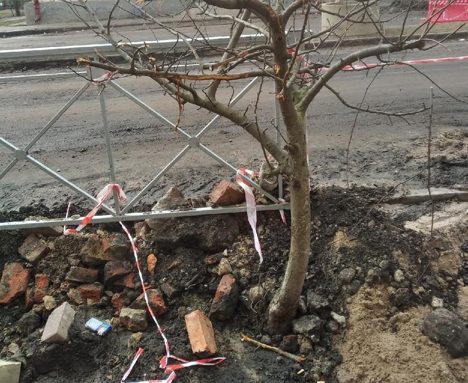 Яблони на Ильине улице