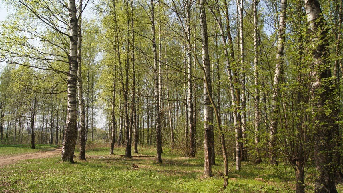 Деревяницкий парк