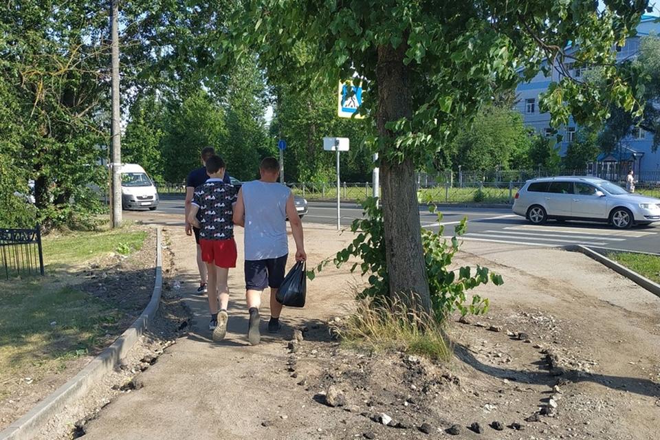 Липа посреди тротуара