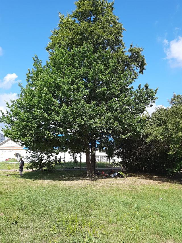 Деревья и кусты на участке под магазин