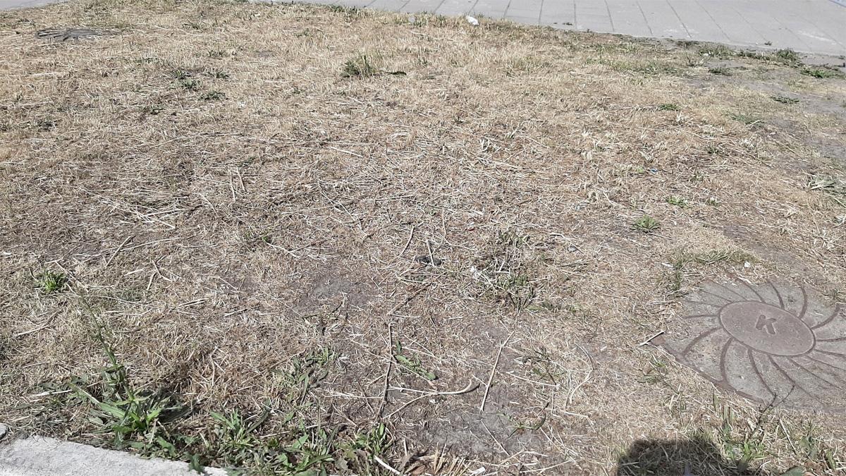 Тот же газон после покоса