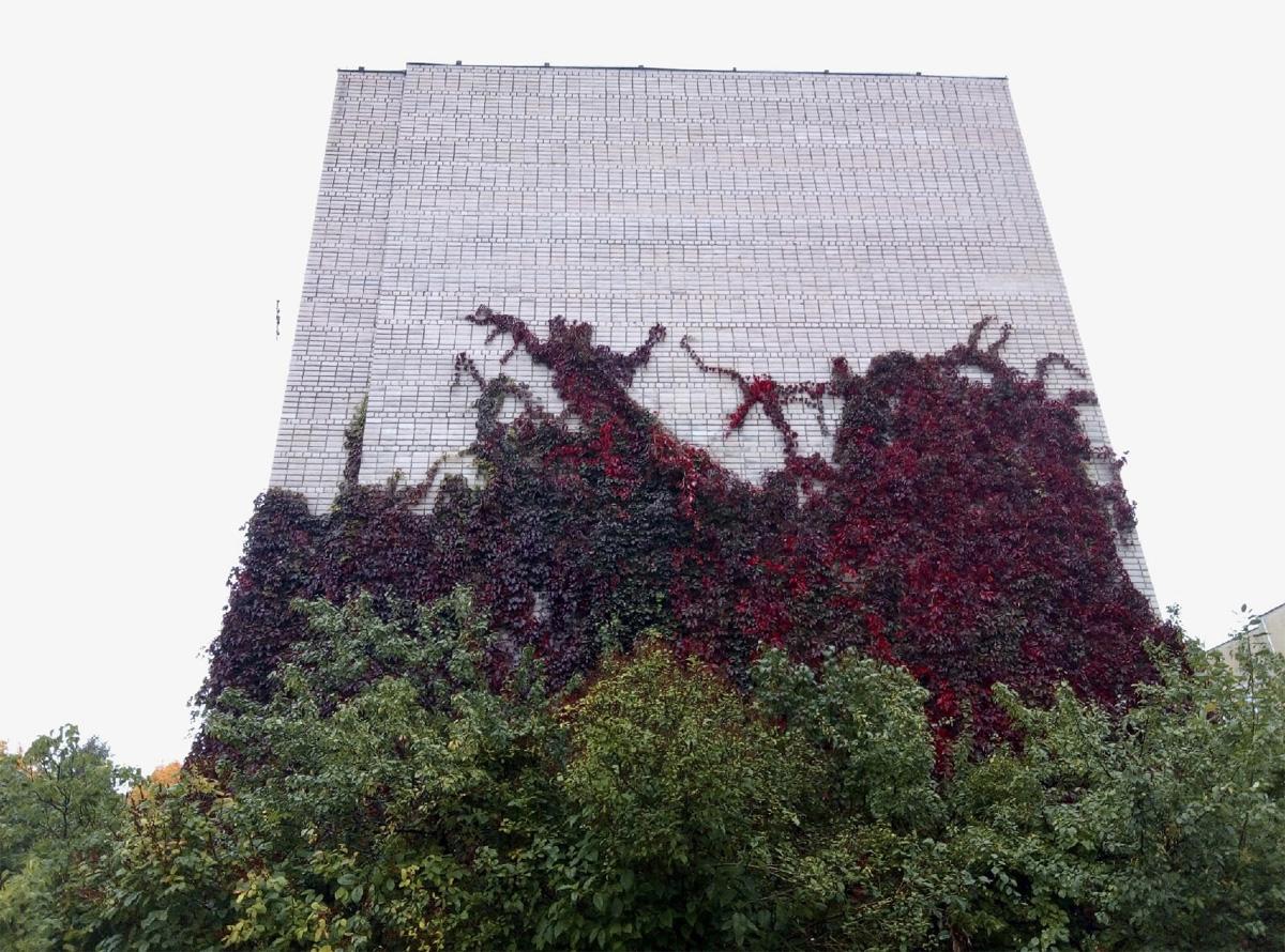 Вьющиеся растения на фасаде дома